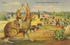 "Texas Cowboy Riding a Jack Rabbit C.T. General Texas Scenes Curteich – Chicago ""C.T. Art-Colortone"" TX-5, 3B-H6, 5.5″x3.5″"