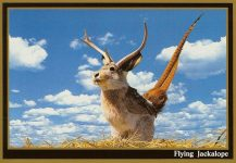 "Flying Jackalope ca. 1992 South Dakota Gold One of the world's rarest and most unusual animals… it is most frequently found in South Dakota. It is extremely shy and capable of blinding speed to escape detection. Because of its evasive capability it has not been considered one of our ""endangered species"" despite its rarity. 1984 Dakotaland Postcards & Souvenirs, Inc. Mitchell, SD 6″x4″"