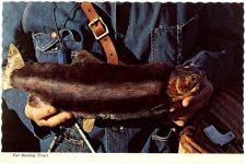 Fur Bearing Trout Post Card the Continental card Mike Roberts Berkeley 94710 Front B137 6″x4″