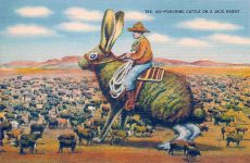 Tex. 101 Punching Cattle On a Jack Rabbit Linen Postcard ca. 1950 5.5″x3.5″ San Antonio Card Co San Antonio, Texas