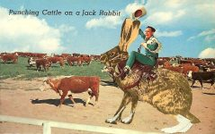 Punching Cattle on a Jack Rabbit Plastichrome, P55367, 5.5″x3.5″ Colourpicture Publishers INC Boston 30, Mass