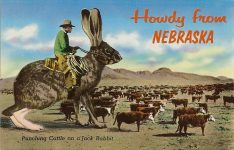 Howdy from Nebraska And out here in the West they do punch cattle. Some of them do on Broncos and even as you can see, some of them do on the lowly Jack Rabbit. Plastichrome Boston, Mass 5.5″x3.5″