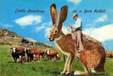 Cattle Punching On a Jack Rabbit Some Cowboys use their favorite Bronc for Cattle Punching and some as you can see, prefer the Jack Rabbit. Dexter Press West Nyack, New York 6″x4″ Looks like the same rabbit to me.