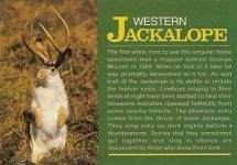 Western Jackalope Photo Don Moffet A John Hinde Curteich Product Printed in Ireland 6″x4″
