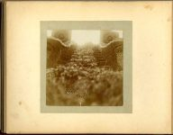 """Gates Ajar"" Oct '97 1897 Minneapolis & St. Paul, Minnesota PHOTOGRAPHS To: Mrs. N.F. Parsons from M.I. Came, St. Paul, Minn (524 Cedar?) October 21st 1897 Snapshot: 3.5″x3.5″ Album: 7″x5.5″"