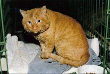 Spike Kitty He has no fangs. He got adopted. Photo: January 30, 1995