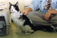 Perry Kitty AFTER At the Plymouth Heights Pet Hospital Photo: October 15, 1994