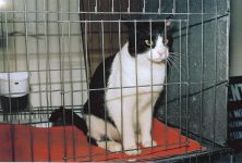 Billy Kitty At a Pet Haven Adoption Day He got adopted January 15, 1995 Photo: January 7, 1995