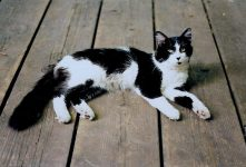 Miles Kitty aka Marble Kitty Backyard deck Photo: July 11, 1995
