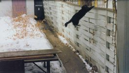 Leaping Matt Cat aka Matt Vader Kitty Backyard Photo: February 18, 1996