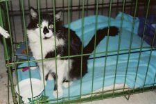 Stray black & white girl kitty She went to Last Hope in Farmington. Photo: January 28, 2003