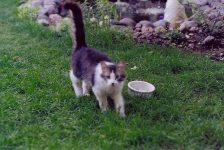 Jimmy Kitty In the backyard. Photo: ca June 12, 2000