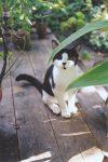 Skeezer Kitty aka Moe aka Molly In the backyard. Photo: August 18, 2000