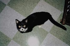 Diamond Kitty Rescued from next door. She's already had two litters! Photo: September 8, 2001