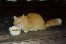 Leo Kitty In the backyard. He went to Last Hope in Farmington. Photo: November 9, 2001