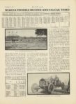 1910 11 17 MARMON SAVANNAH CUP WON BY DAWSON IN MARMON MERCER FINISHES SECOND AND FALCAR THIRD Nordyke & Marmon Company Indianapolis, Indiana MOTOR AGE November 17, 1910 8.75″×12″ page 11