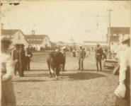 1903 ca. Minnesota State Fair Barn, Restroom? & Barn 12″×9.25″ image 9.75″×7.75″