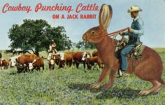 Cowboy Punching Cattle ON A JACK RABBIT krome postcard front