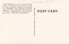 """1950 ca. ON DISPLAY AT """"THE FRIENDLY BUCKHORN"""" A """"DINGBAT"""" FLUSHED FROM ITS WILD AND WOLLY LAIR WEST OF RICE LAKE, WISCONSIN 27309 postcard back"""