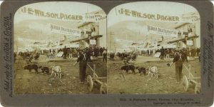 1900 ca. Dawson City Klondike A Business Street 3212 7″×3.5″ stereoview front