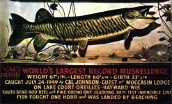 1949 7 24 WORLD'S LARGEST RECORD MUSKELLUNGE Hayward, WIS postcard front