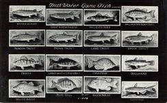 Fresh Water Game Fish RPPC front