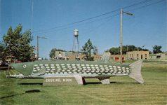 Largest Northern Pike in Minnesota Erskine, Minnesota postcard front