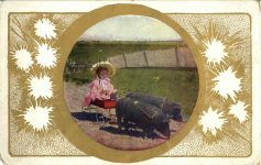 1905 ca. Little girl in cart pulled by two pigs postcard front