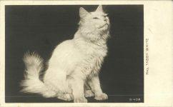 1905 ca. MRS. TABBY WHITE cat B-408 RPPC front