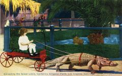1910 ca. Exceeding the speed limit Child wagon and harnessed alligator Los Angeles, Cal postcard front