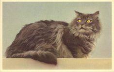 1960 ca. Belgium cat 2 postcard front