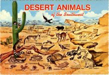 1971 DESERT ANIMALS of the Southwest postcard front