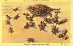 1950 ca. Family of Horned Toads on the Desert D-81 postcard front