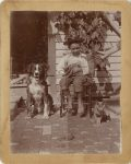 1895 ca. CAT Seated boy with two kittens plus dog and third cat on brick 3.5″×4.5″ photo front