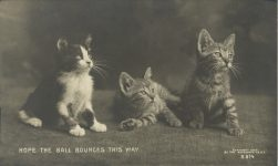 1910 ca. CAT HOPE THE BALL BOUNCES THIS WAY B-814 RPPC front