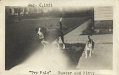 1921 8 6 CAT Two Pals Buster and Kitty 4″×2.5″ snapshot front