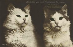 1923 7 4 CAT Birthday Joy and Happiness be yours RPPC front