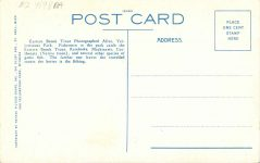 1925 ca. EASTERN BROOK TROUT Yellowstone Park postcard back