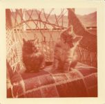 1960 ca. CAT Two real cute kittens outside on wicker chair 3″×3″ snapshot front