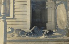 1910 ca. CATS Cats eating on porch RPPC front