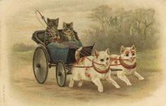 1905 ca. CAT in buggy pulled by cats A M B No. 109 postcard front